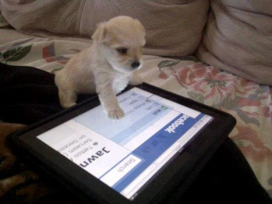 file_3479_puppy-tablet