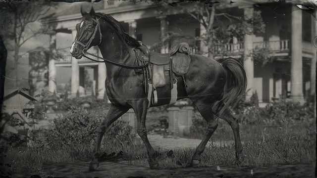 red dead redemption 2 arabian horse breed