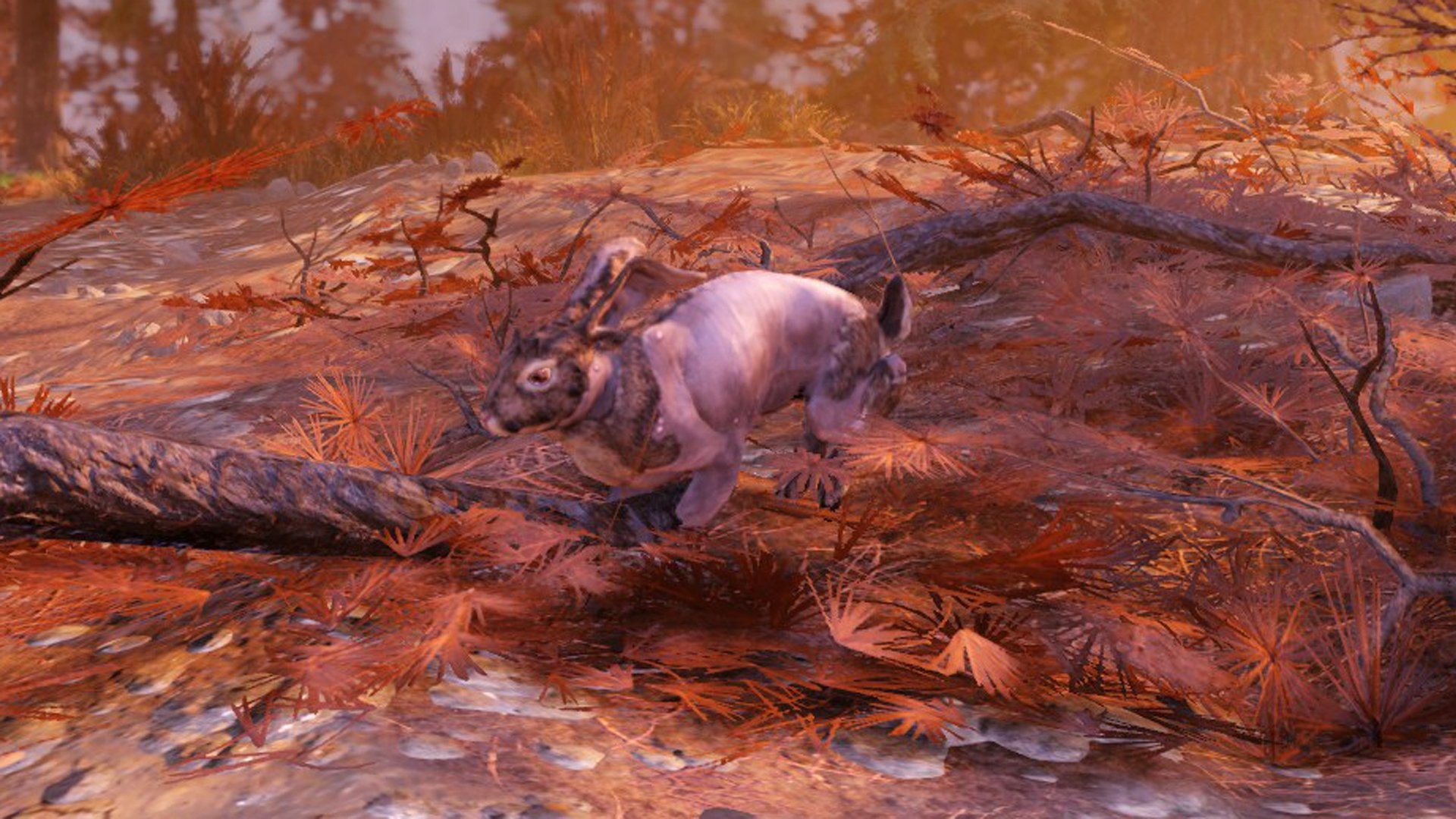 Fallout 76 rabbit location