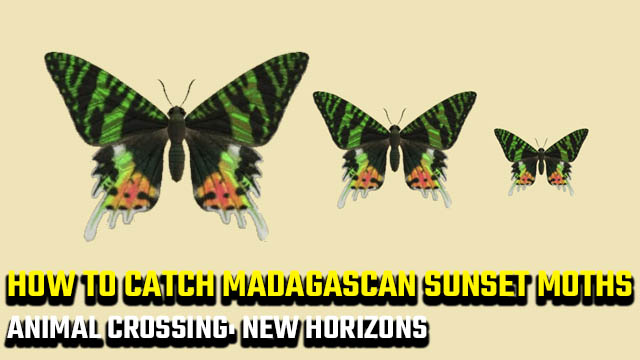 how to catch a Madagascan Sunset Moth in Animal Crossing: New Horizons
