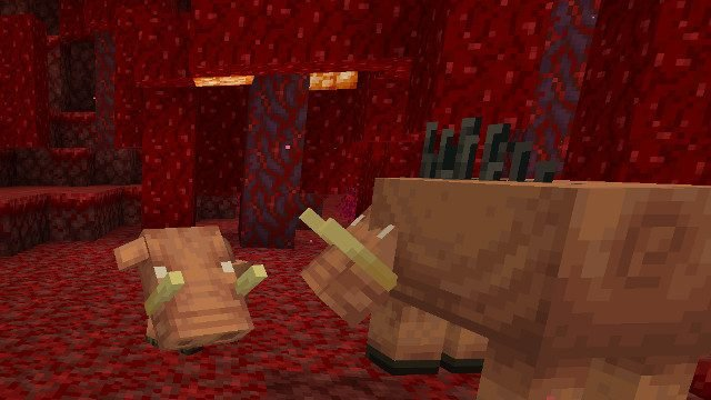How to tame a Hoglin in Minecraft two Hoglins