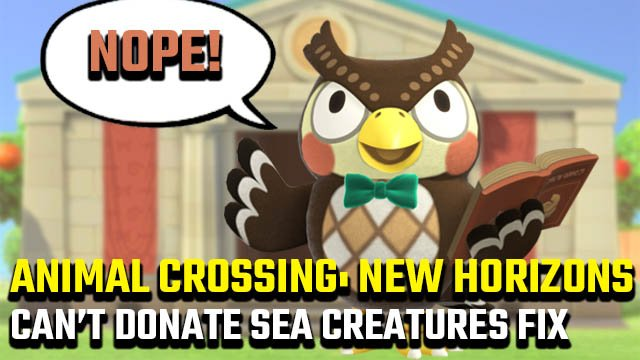 Animal Crossing: New Horizons Blathers won't accept sea creatures fix